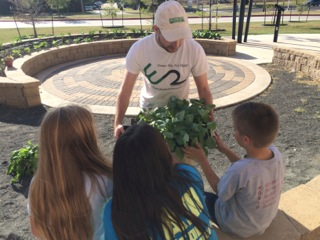 ​Week 6. The students get to choose cabbage or chard plants to take home. They are excited to care for their own plants as well as the school garden.